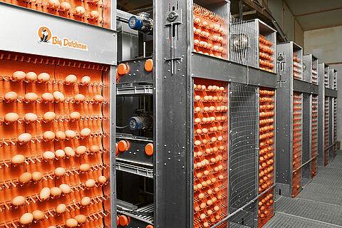 Yumurta toplama sistemleri